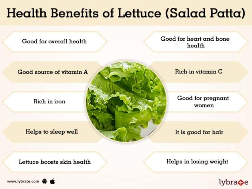 Lettuce Salad Patta Benefits And Its Side Effects Lybrate